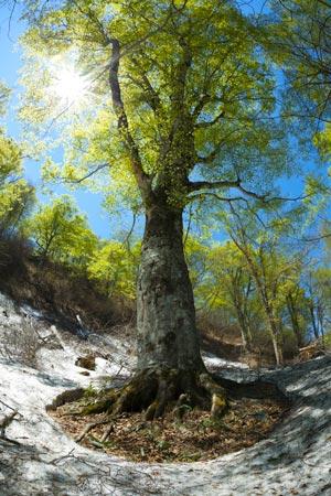 白神山地の画像 p1_34