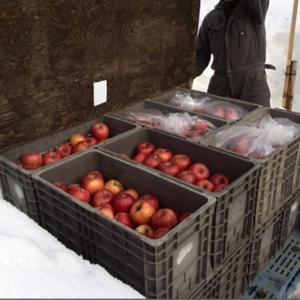 雪中リンゴ