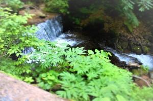 くろくまの滝途中